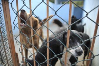 Câmara de Vereadores de Três Rios realiza audiência que trata da defesa animal nesta quarta-feira